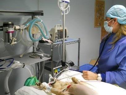 ambulatorio veterinario a foggia