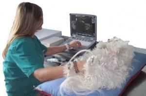 ecografia veterinaria foggia
